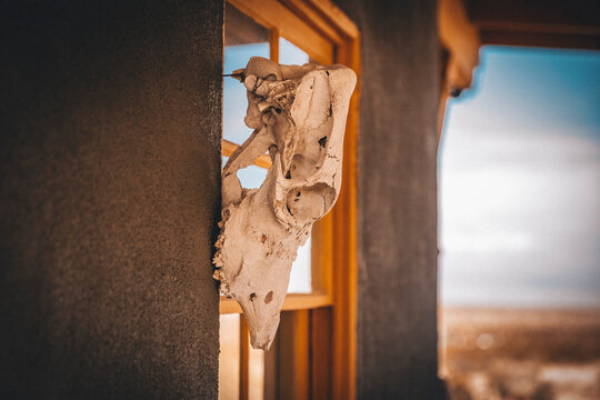 An animal scull is hanging on a yellow window of a house in a desert