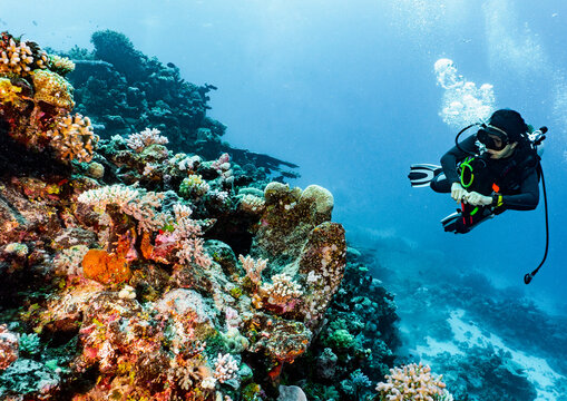 Scuba diver exploring coral at the Great Barrier Reef