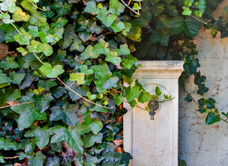 Close-up of a fountain near an ivy plant