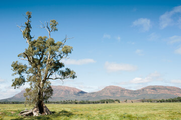 Landscape of the Cazneaux Tree in the Flinders Ranges
