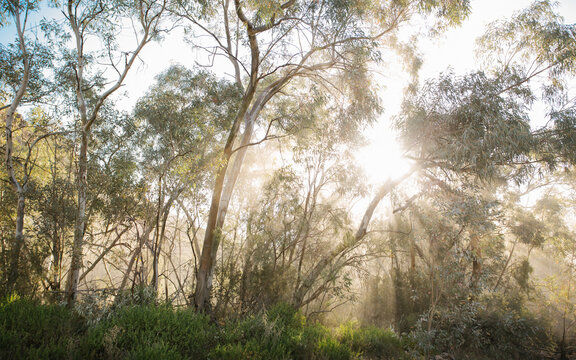 Sun shining through Aussie bush