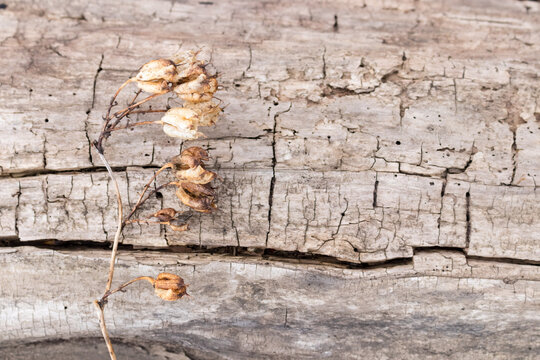 dry branch of a plant on a log without bark