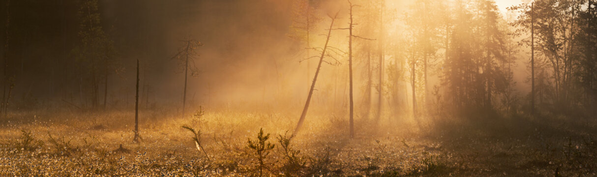 First rays of the rising sun breaking through the fog on the bog in eastern Finland
