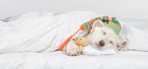 Puppy wearing warm hat hugs favorite toy bear and sleeps under white blanket at home. Empty space for text