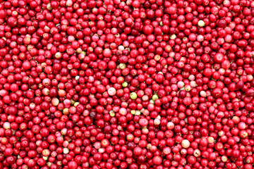 Cranberries - small red acid berries used in cooking