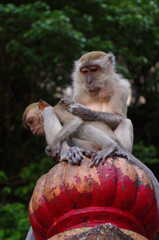 Family of free monkeys grooming at Batu Cave temple in Malaysia