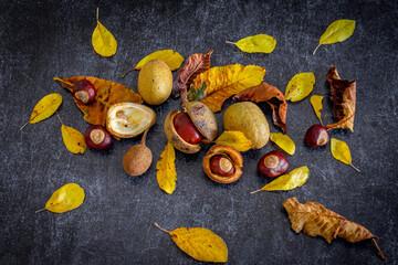 marrons et feuilles en automne