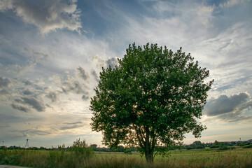 Samotne drzewo 2