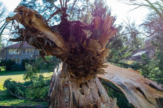 A Split Stump With A Fallen Tree After a Storm at the Elkins Estate