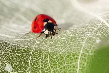 Papiers peints Papillon Beautiful ladybug on leaf defocused background