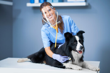 Female vet examining a dog in clinic