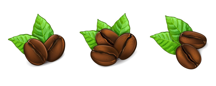Big coffee beans with leaves. Vector Illustration