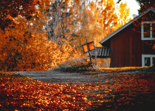 Beautiful autumn in colour in Sweden