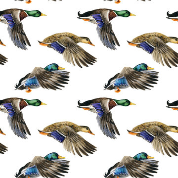 watercolor Seamless pattern with flying duck