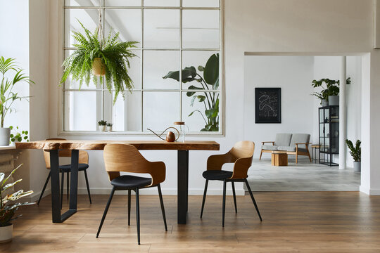 Stylish and botany interior of dining room with design craft wooden table, chairs, a lof of plants, window, poster map and elegant accessories in modern home decor. Template.