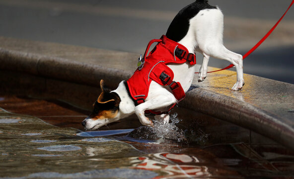 A dog jumps into a fountain during a sunny afternoon in Frankfurt