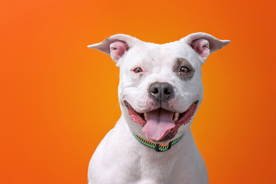 studio shot of a shelter dog on an isolated background