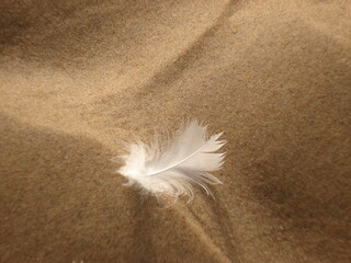Close-up with intentional areas of focus and blurring areas, a small white feather lies in the fine-grained sand of a beach, a symbol of the lightness and flatness of life
