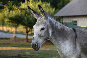 Selective focus shot of a donkey with a barn and trees on the background