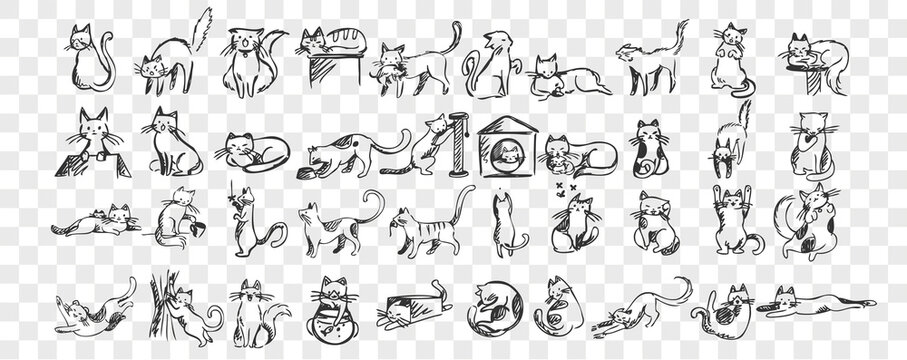 Cats doodle set. Collection of hand drawn pencil sketches templates patterns of adorable pets kitten kitty sleeping stretching playing with ball hiding in box or basket. Illustration dmestic animals.