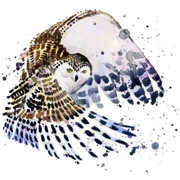 snowy owl illustration watercolor. Polar nature