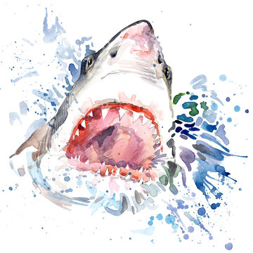 Cute shark. watercolor illustration. marine nature. ocean animals. wildlife.