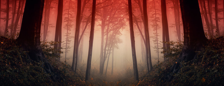 sunset in dark fantasy forest, forest panorama