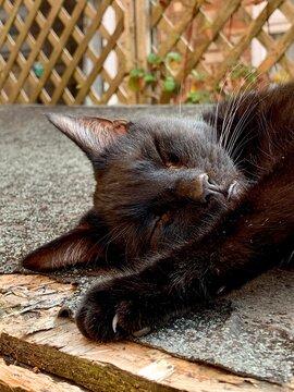 Cat sleeping in garden