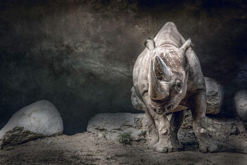 fine art portrait of a rhino