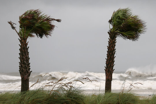 Palm trees sway in the wind as Hurricane Sally approaches in Gulf Shores