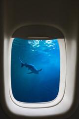 Un requin à travers un hublot d'avion