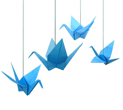 Blue origami paper cranes haning isolated white