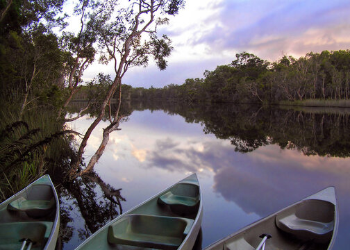Canoes settling for the night after a day of exploring the river system in the Wilderness Eucalyptus