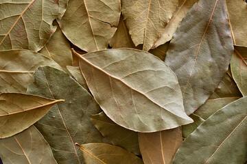 Lots of bay leaf background image