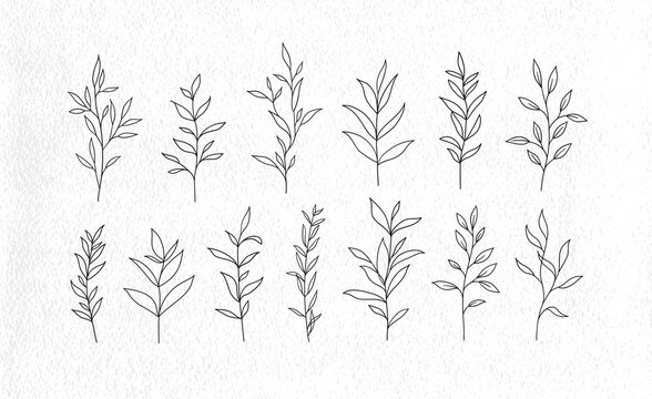 Set of vector tree branches and leaves. Hand drawn floral elements.