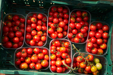 Plastic box with fresh ripe red tomatoes