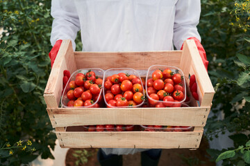 Man holding box of ripe red tomatoes