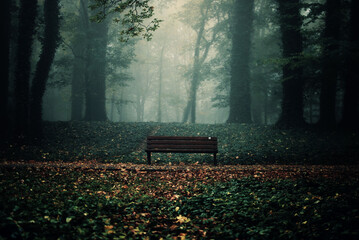 Empty bench in the forest on a gloomy autumn day