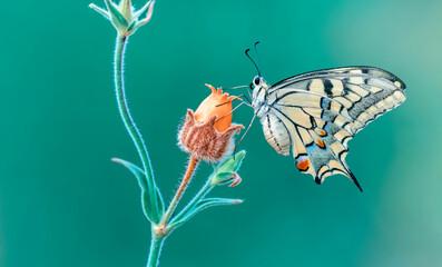 Macro shots, Beautiful nature scene. Closeup beautiful butterfly sitting on the flower in a summer...