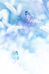 Beautiful butterflies in the snow on the wild grass on a blue background. Snowfall Artistic winter christmas natural image. Winter and spring background. Copy space.