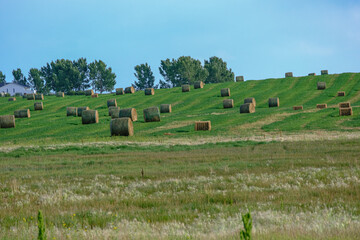 Bales of Hay on a farm field in Alberta After Harvest
