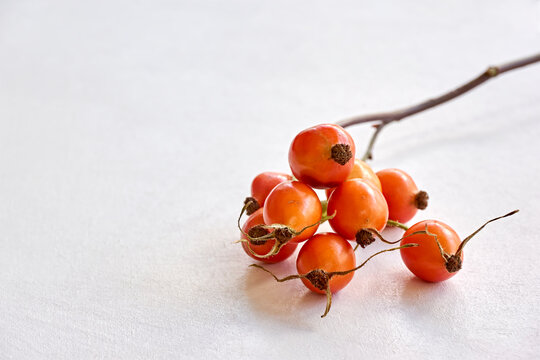 Twig with orange rose hips on a white background. Autumn concept.