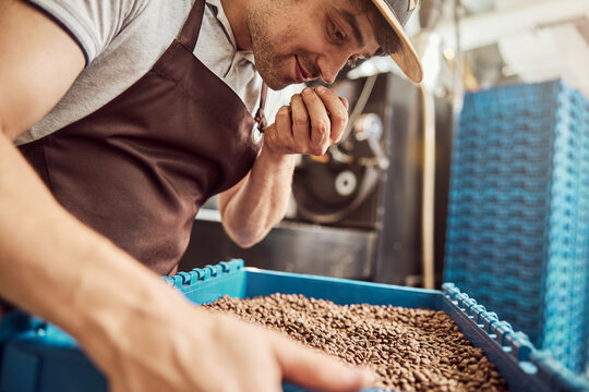 Handsome male worker smelling roasted coffee beans