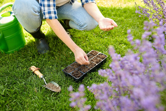 gardening, farming and people concept - hands of young woman planting flower seeds to starter pots tray with soil at summer garden