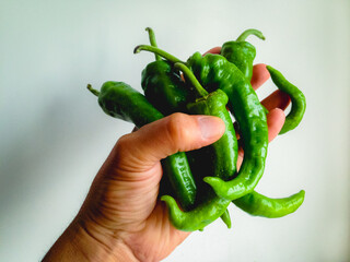 organic-large-green-bell-pepper_002