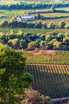 Vineyards at Penedes wine region in Catalonia, Spain