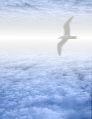 Wall Mural - White Bird in Clouds. 3D rendering