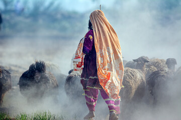 a shepherdess with flock of sheep in dust