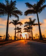 sunrise in the park beach palms sun tree florida miami