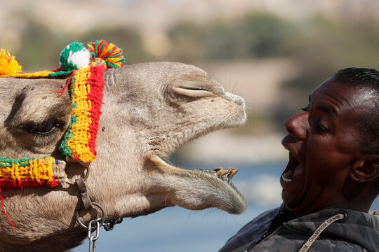 """Hossam Nasser, 32, plays with his camel """"Anter"""" front his house in Aswan"""